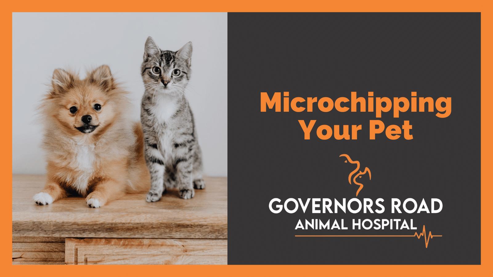 Pet Microchipping Dundas